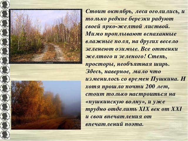 Стоит октябрь, леса оголились, и только редкие березки радуют своей ярко-желт...