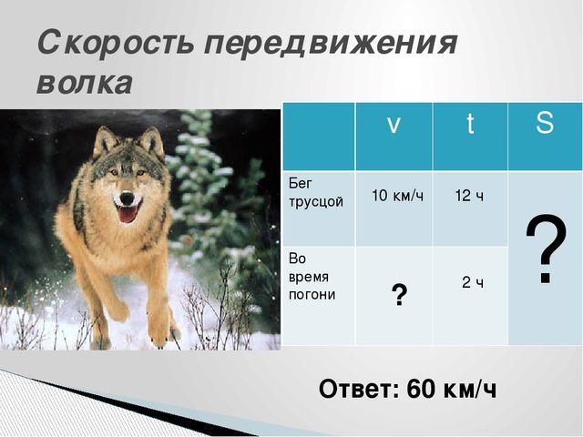Скорость передвижения волка Ответ: 60 км/ч 12 ч 2 ч ? ? 10 км/ч v t S Бегтрус...