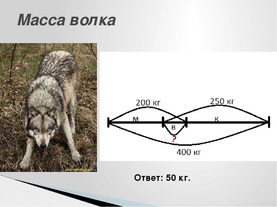 Масса волка Ответ: 50 кг.