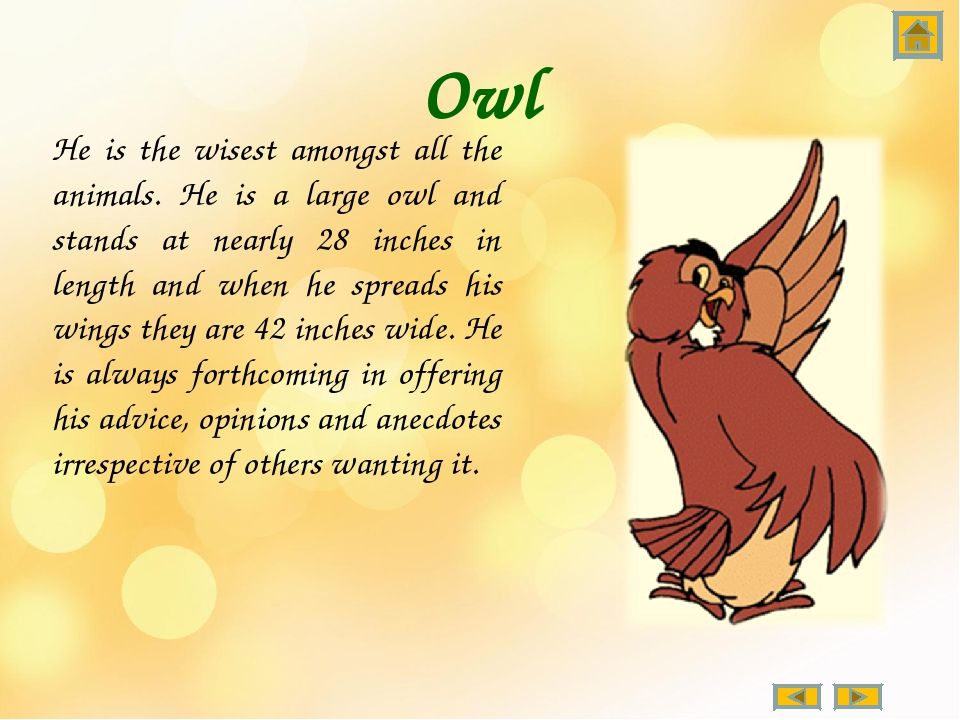 Owl He is the wisest amongst all the animals. He is a large owl and stands at...