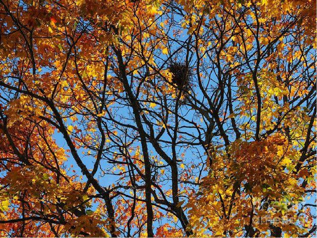 Гнёзда чёрные пусты, Меньше сделались кусты. Ветер листья носит, Наступила…..