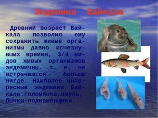 Эндемики Байкала Древний возраст Бай-кала позволил ему сохранить живые орга-н