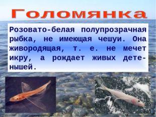 Розовато-белая полупрозрачная рыбка, не имеющая чешуи. Она живородящая, т. е.