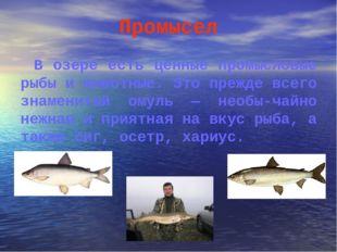 Промысел В озере есть ценные промысловые рыбы и животные. Это прежде всего зн