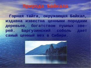 Природа Байкала Горная тайга, окружающая Байкал, издавна известна ценными пор