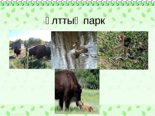Ұлттық парк