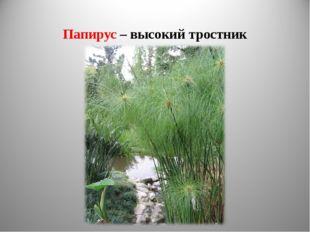 Папирус – высокий тростник