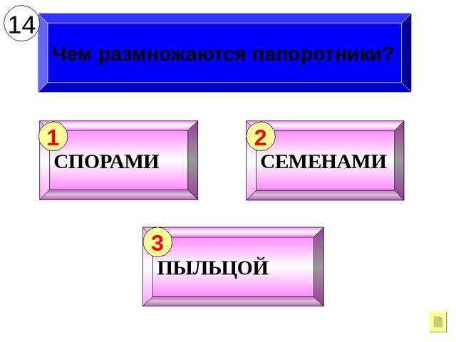 Чем размножаются папоротники? 14 СПОРАМИ 1 СЕМЕНАМИ 2 ПЫЛЬЦОЙ 3
