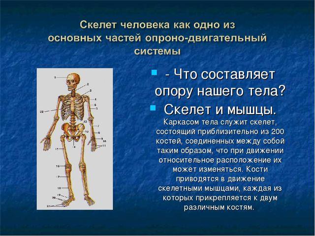 - Что составляет опору нашего тела? Скелет и мышцы. Каркасом тела служит скел...