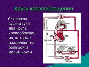 Круги кровообращения У человека существуют два круга кровообращения, которые