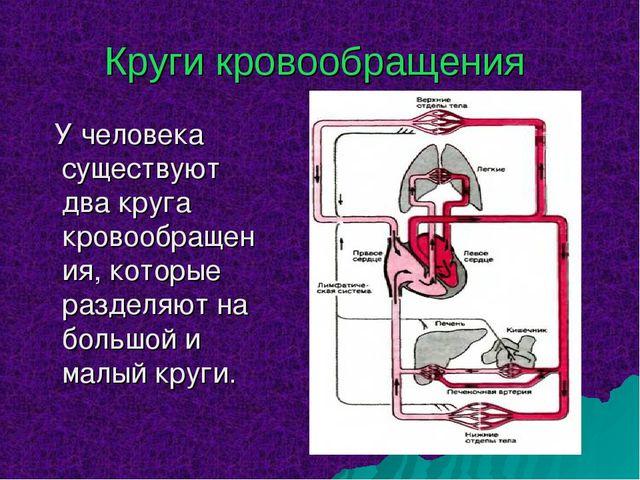 Круги кровообращения У человека существуют два круга кровообращения, которые...