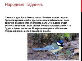 Народные гадания. Синица - для Руси божья птица. Раньше на нее гадали: бросал