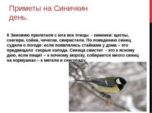 Приметы на Синичкин день. К Зиновию прилетали с юга все птицы - зимники: щегл