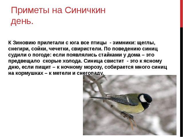 Приметы на Синичкин день. К Зиновию прилетали с юга все птицы - зимники: щегл...