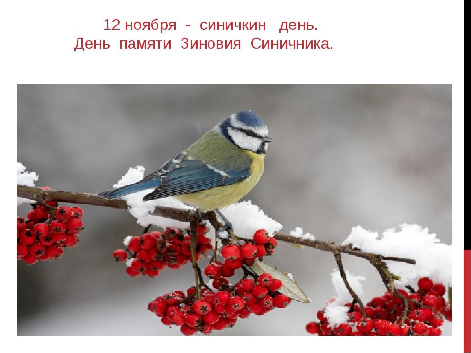 12 ноября - синичкин день. День памяти Зиновия Синичника.