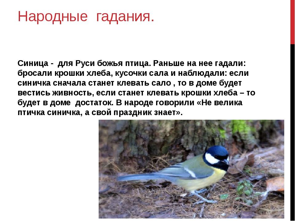 Народные гадания. Синица - для Руси божья птица. Раньше на нее гадали: бросал...