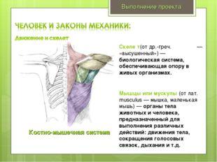 Выполнение проекта Костно-мышечная система Скеле́т(от др.-греч. σκελετοσ — «в