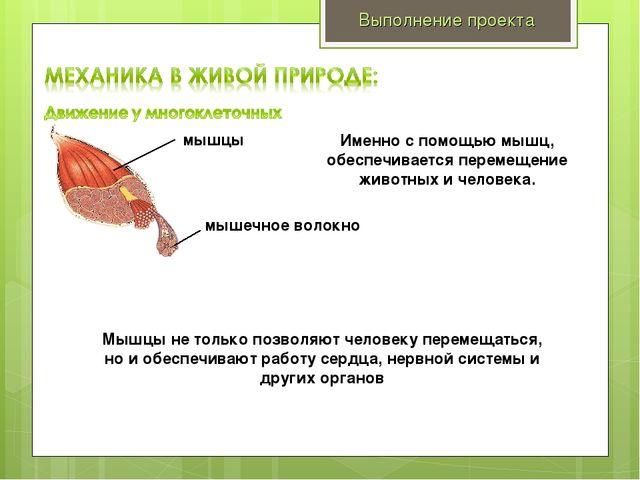 Выполнение проекта мышечное волокно мышцы Именно с помощью мышц, обеспечивает...