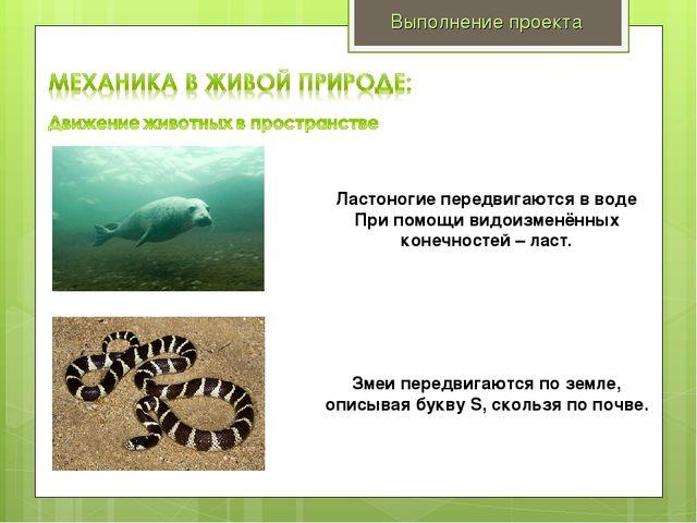 Выполнение проекта Ластоногие передвигаются в воде При помощи видоизменённых...