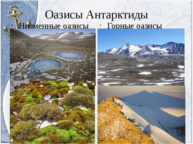 Оазисы Антарктиды Низменные оазисы Горные оазисы