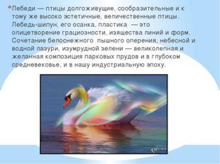 Лебеди — птицы долгоживущие, сообразительные и к тому же высоко эстетичные, в