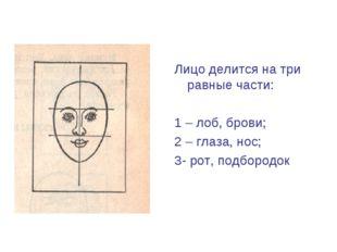 Лицо делится на три равные части: 1 – лоб, брови; 2 – глаза, нос; 3- рот, под