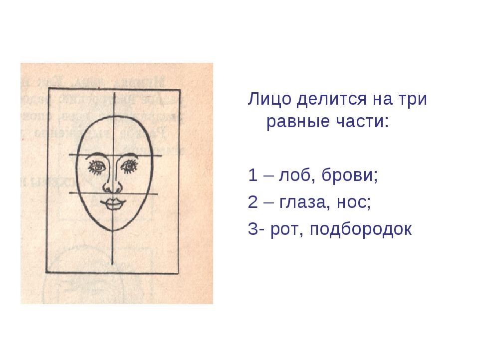 Лицо делится на три равные части: 1 – лоб, брови; 2 – глаза, нос; 3- рот, под...