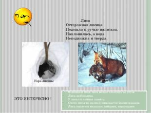 ЭТО ИНТЕРЕСНО ! Лиса Мышиный писк лиса может слышать за 100 м Лиса любопытна.