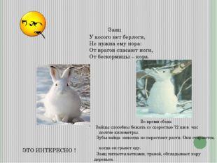 ЭТО ИНТЕРЕСНО ! Заяц Зайцы способны бежать со скоростью 72 км в час долгие ки