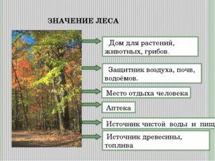 ЗНАЧЕНИЕ ЛЕСА Дом для растений, животных, грибов. Защитник воздуха, почв, вод
