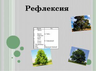 Рефлексия Дерево Лес I.Пихта Береза Кедровая сосна Липа А. Тайга Ольха Сосна