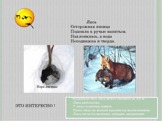 ЭТО ИНТЕРЕСНО ! Лиса Мышиный писк лиса может слышать за 100 м Лиса любопытна....