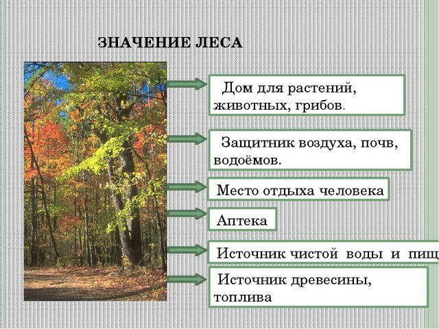 ЗНАЧЕНИЕ ЛЕСА Дом для растений, животных, грибов. Защитник воздуха, почв, вод...