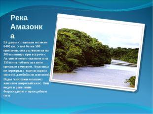 Река Амазонка Её длина с главным истоком 6400 км. У неё более 500 притоков, о