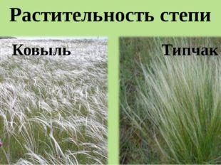 Растительность степи Ковыль Типчак