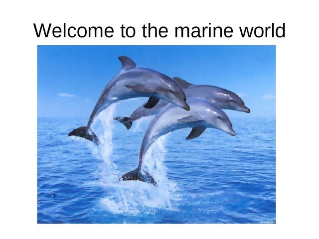 Welcome to the marine world