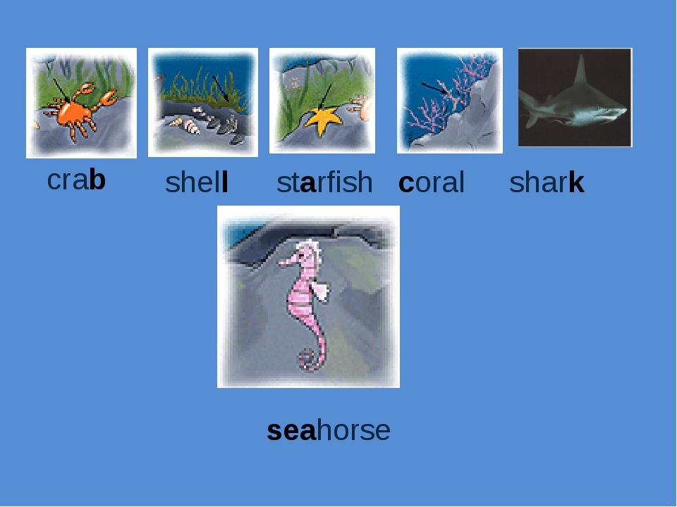 crab shell starfish coral shark seahorse