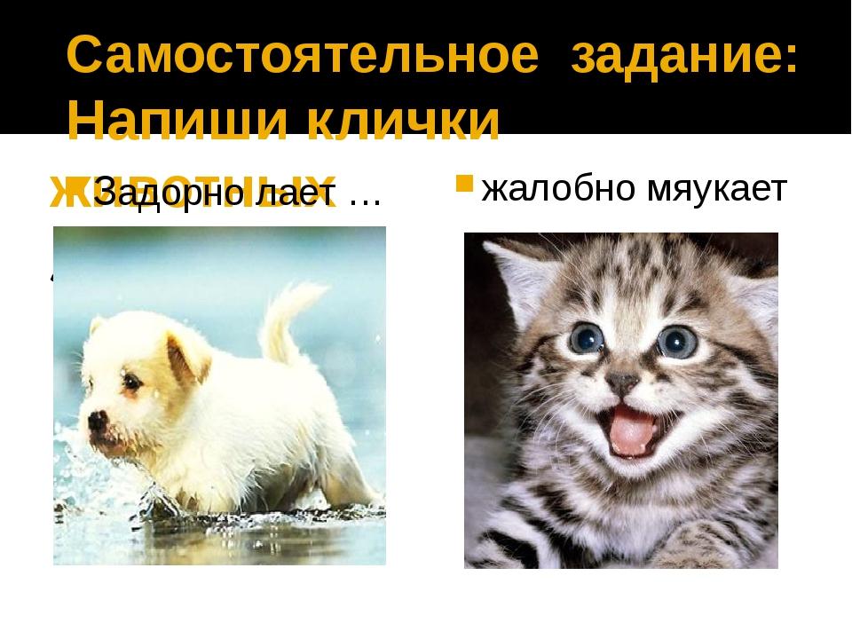Самостоятельное задание: Напиши клички животных Задорно лает … Задорно лает...