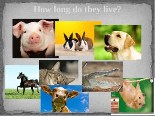 How long do they live?