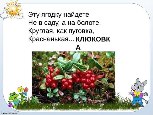 Эту ягодку найдете Не в саду, а на болоте. Круглая, как пуговка, Красненькая...