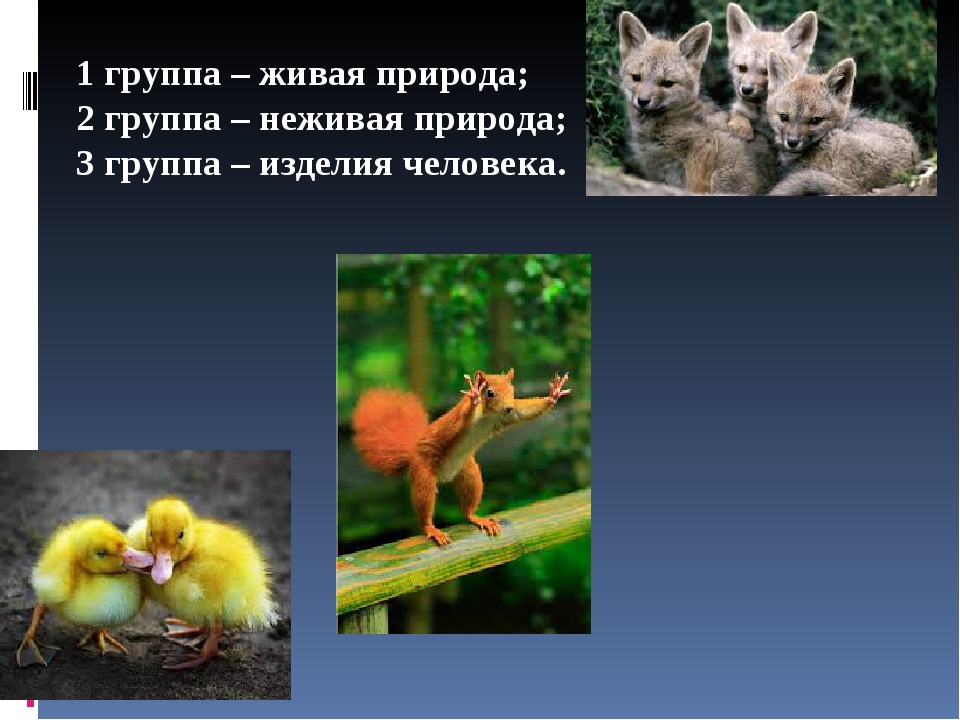 1 группа – живая природа; 2 группа – неживая природа; 3 группа – изделия чело...