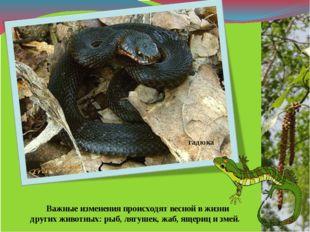 Важные изменения происходят весной в жизни других животных: рыб, лягушек, жа
