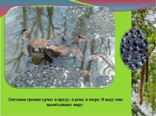 Лягушки громко урчат в пруду, в реке, в озере. В воду они вымётывают икру.