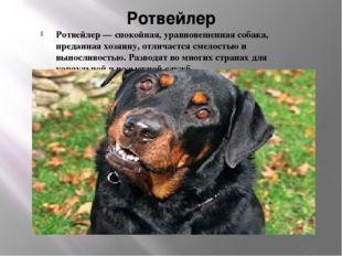 Ротвейлер Ротвейлер — спокойная, уравновешенная собака, преданная хозяину, от