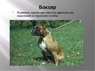 Боксер Подвижен, хорошо дрессируется, пригоден для караульной и сторожевой сл