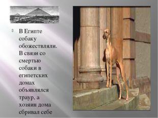 В Египте собаку обожествляли. В связи со смертью собаки в египетских домах об