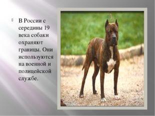 В России с середины 19 века собаки охраняют границы. Они используются на воен