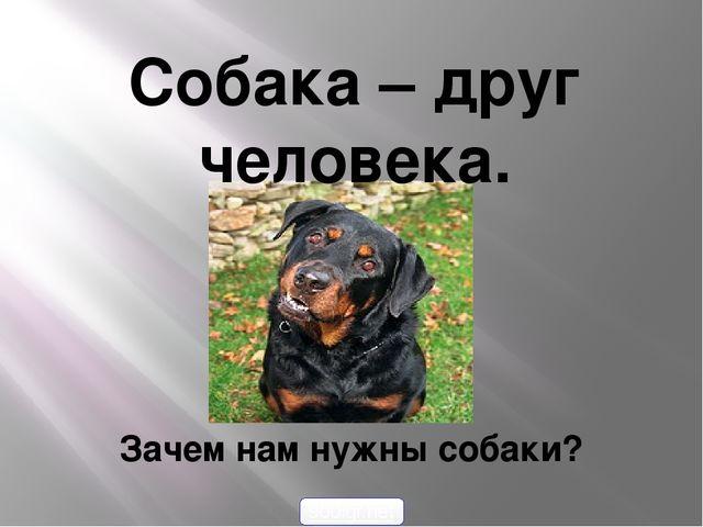 Собака – друг человека. Зачем нам нужны собаки? 900igr.net