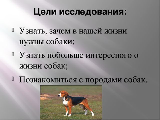 Цели исследования: Узнать, зачем в нашей жизни нужны собаки; Узнать побольше...