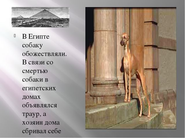 В Египте собаку обожествляли. В связи со смертью собаки в египетских домах об...